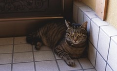My Cat (Shoichi Masuhara) Tags: cat nikon f2  nikonf2photomic photomic fujifilmprovia100f epsongtx970