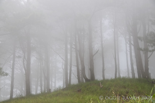 Nueva Vizcaya Salacsac Foggy Forest