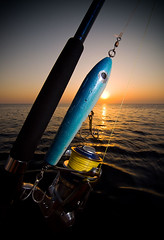 Image of a stickbait, a popular fishing lure for tropical popping. SB800 with honlphoto grid on camera right (Nicola Zingarelli) Tags: sunset fishing nikon egypt casting lure saltwater popping walkingthedog sportfishing daiwa sb800 saltiga stickbait honlphotogrid