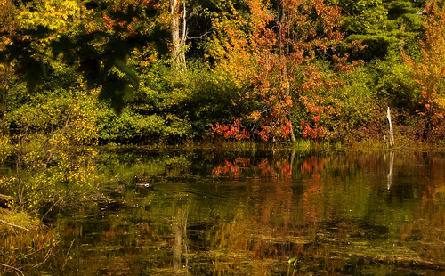 秋天的颜色和加拿大鹅