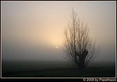 Hazy shade of winter (Papafrezzo,  2007-2014 by www.papafrezzo.com) Tags: winter sun mist haze nikon nederland explore willow hazy solitary zon knotwilg oudalblas pollardwillow explored d80 ownfav ownfavs 12232008091730 papafrezzo
