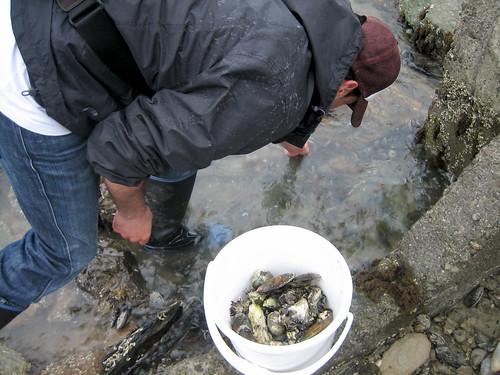 Collecting Seafood at Marlborough Sounds