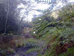 Dewy trails