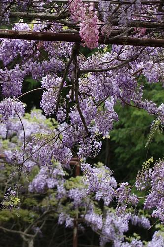 美しい花 / Beautiful scenery