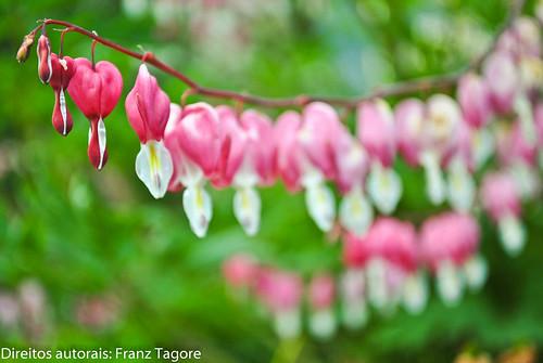 """""""aja"""" coração... série últimas do ano em cores by Franz Tagore फ्रांज ठाकुर"""