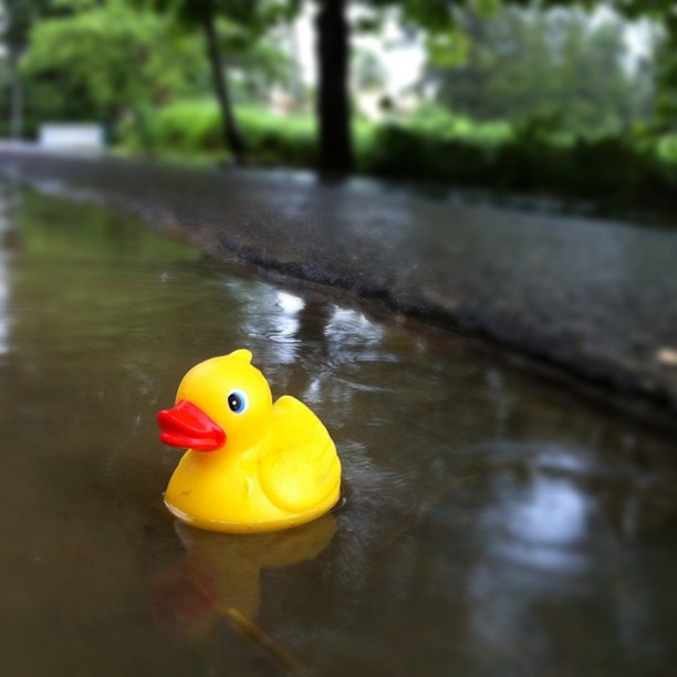 Lost duckie
