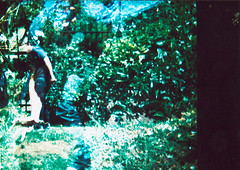 Jardineandola (Fiskal) Tags: procesocruzado holga135 peliculavencida
