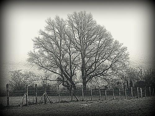 068 Tree BW