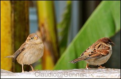 The two sparrows ...