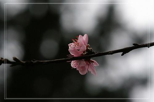 PICT0317