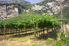 Se presenta un nuevo herbicida que se adapta a la viticultura sostenible