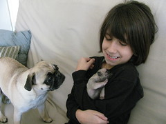 The Pug Puppies (DenaVB) Tags: puppies ethan pugs cristin pugpuppies thepuppies