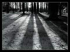 Shadows and Tall Trees (An Gobn Saor) Tags: trees ireland boy bw dublin snow pine forest u2 talltrees killiney debutalbum killineyhill anawesomeshot shadowsandtalltrees angobnsaor gobnsaor