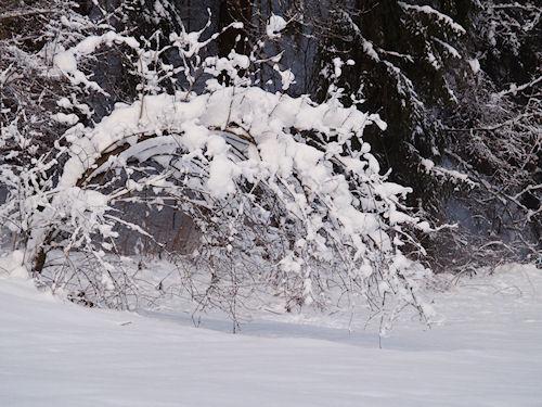 WL Winter09e