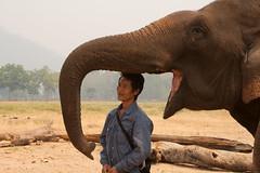 Elephant Nature Park (Christian Haugen) Tags: travel elephant thailand backpacking chiangmai backpacker rtw aroundtheworld elephantnaturepark 175days