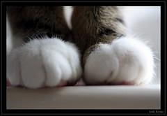 Millie 8 (Josh Kemp-Smith) Tags: kemp 2096 josh cat kitten millie milly 450 450d canon sigma105 105mm sheffield macro tabby cute thebiggestgroupwithonlycats