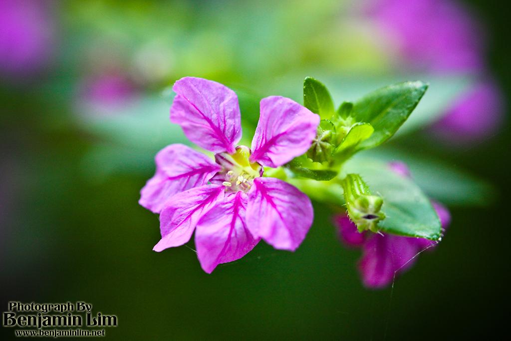 butterflyfarm_flower05