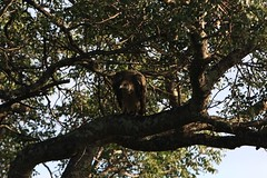 IMG_2114 (redsnapper2009) Tags: dog elephant bird african wildlife lion zebra giraffe hippo vulture impala krugernationalpark wid waterbuck kudu afrcan