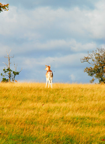 Bambi at Knole!