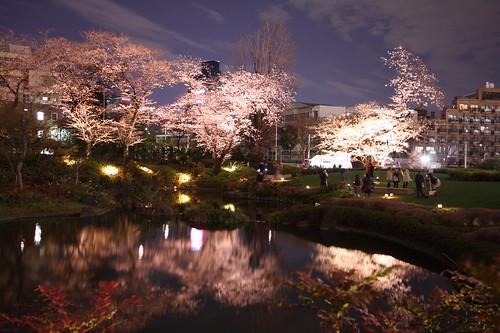 Sakura - Night shot of RoppongiHills, 05