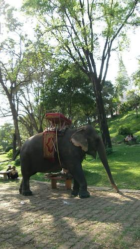 38.也可以騎大象繞塔山(Wat Phnom)四週