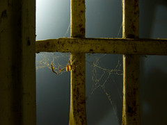 Glowing Web (lefeber) Tags: window architecture backlight grate la losangeles rust bars dof interior wroughtiron spiderweb plus filmset afi driedleaves rustedmetal windowgrate