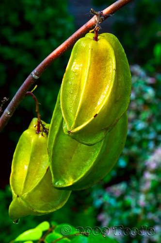 Star Fruit [Protects your Heart]