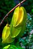 Star Fruit [Protects your Heart] (T Ξ Ξ J Ξ) Tags: fruit nikkor soe d300 teeje anawesomeshot startfruit theunforgettablepictures