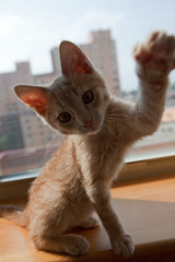 Backlit (ibm4381) Tags: skyline kitten madison backlit canonef1635mmf28liiusm