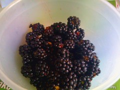 first brambles of the season