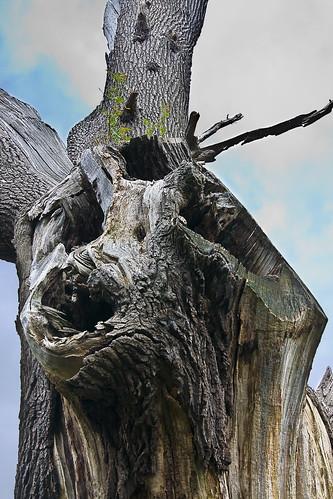 Stark Old Tree