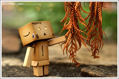 Curious Danboard (EdwardLee's collection) Tags: canon toy toys sigma collection yotsubato yotsuba 1770mm revoltech jfigure 400d danboard edwardlees