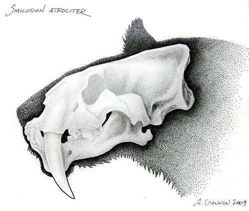 Smilodon atrociter