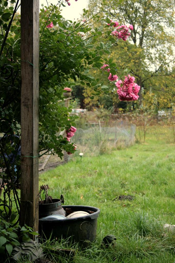 Einblick in den Nutzgarten