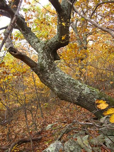 Tree of Life on Humpback Mountain