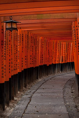 Fushimi Inari: Torii Maze (jiquem) Tags: japan japanese vacances kyoto gate shrine inari   nippon shinto kansai torii japon pilgrimage nihon senja taisha fushimi heian kinki honshu senjyafuda    heiankyo templeasia