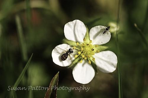 wwhite_flower_bugs