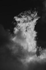 Twins (Zelda Wynn) Tags: sky bw nature clouds auckland nz artgalleryofnsw sunlit equivalent troposphere artgalleryofnewsouthwales zeldawynn inspiredbyalfredstiegltiz