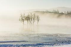 (snow and fog) (zhouyousifang) Tags: china winter snow bird fog landscape cranes  yunnan  everglade 2014   blackneckedcrane