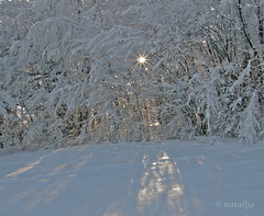 Zasneena Parga 2. (natalija2006) Tags: winter snow nature zima soe natalija sneg parga blueribbonwinner narava theunforgettablepictures goldstaraward npisec