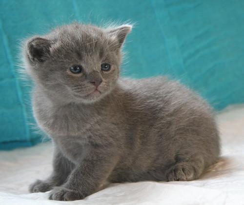 Kittens of Pegusha - Page 2 3204177280_fcbb902d6f