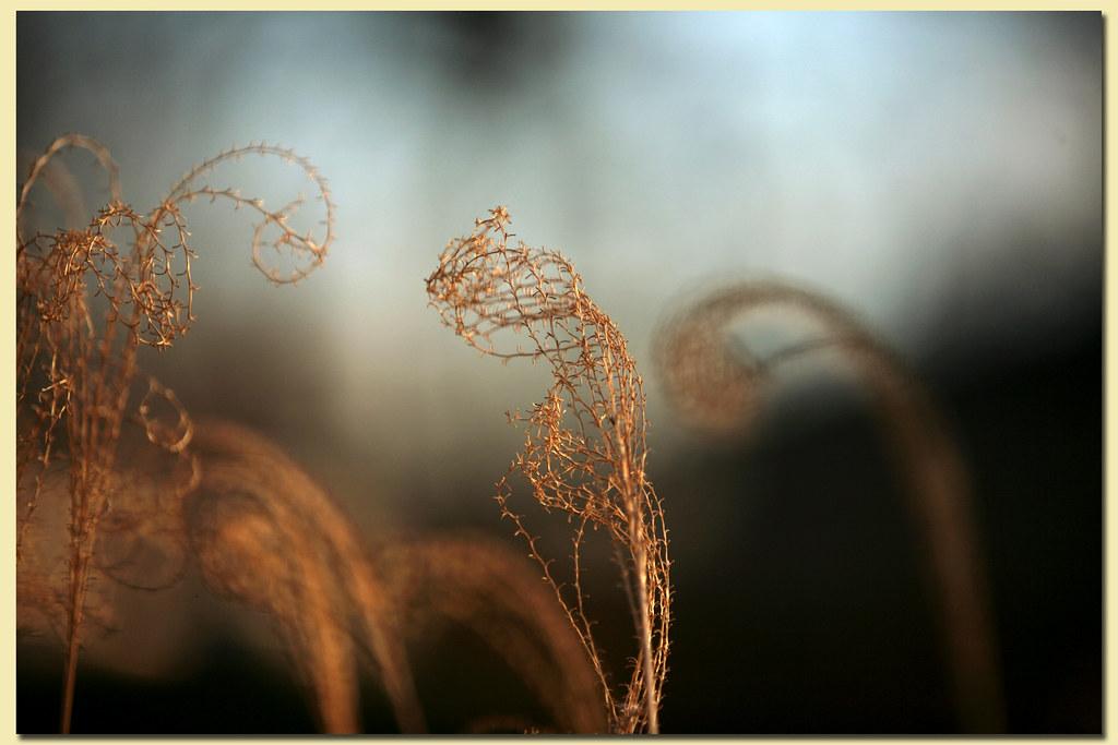 dead grass #2