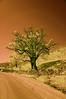 Solitary Tree In Rural Rajasthan (aeschylus18917) Tags: danielruyle aeschylus18917 danruyle druyle infrared scenery landscape surreal ir nikon d70 赤外線 nikond70 sky tree ダニエルルール ダニエル ルール infra red solitarytree road highway india rajasthan edit desert 1870mmf3545gifdx nature 1870mm 1870f3545g nikkor1870f3545g nikkor1870f3545gdx nikkor 1870 f3545g pxi pxt