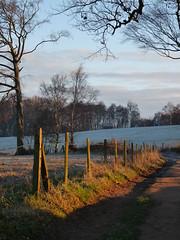 The ridge (jelisaveta21) Tags: morning trees shadow sky cold colour clouds frost landscapesshotinportraitformat