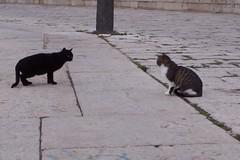 Vinaroz, su mar, sus gatos (Lois Wayne) Tags: blue sea wild cats mountain wil sol cat puerto bay mar doll dolls harbour gatos planning jun vinars callejeros vinaroz taeyang
