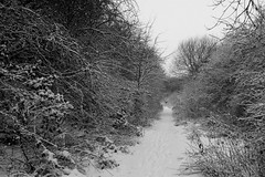 National Cycle Route 6 in the snow