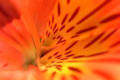 Manchitas (José Lira) Tags: flores wonderfulworldofflowers