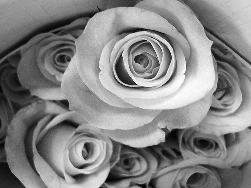 Trader Rose in B&W