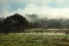 Rolling Fog (segamatic) Tags: park trees sky grass fog clouds creek canon landscape eos rocks state malibu hills canonef24105mmf4lisusm photofaceoffwinner photofaceoffplatinum pfogold thechallengefactory 5dmarkii 5dmkii herowinner ultraherowinner