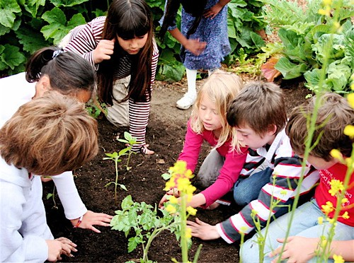 why people are growing vegetable gardens essay Featuring vegetable gardening tips, organic growing techniques, and unique plants for the backyard gardener  i would like to use news papers as mulch in my.